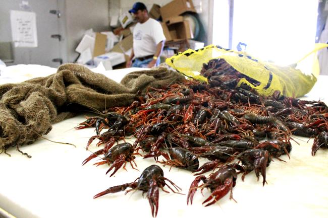 2012-04-10_Crawfish_Pu