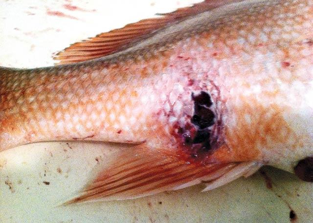 AP_FISH-RESIZED