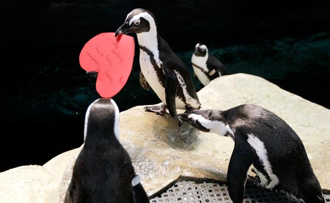 Penguin+Valentines_admi
