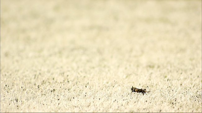 2012-09-12-Crickets_Jorge