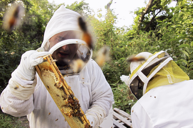 DOM_2012_10_25_Honey_Farm_Pearce