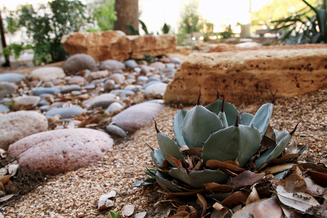 <p>UT landscapers are looking towards xeriscaping, a process in which landscapers replace grass with low-water plants or stone to reduce the usage of water needed to maintain the gardens.</p>