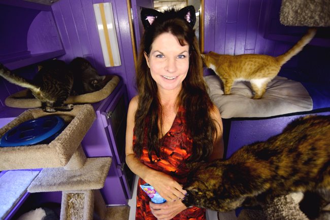 2013-10-24_acro_cats_Charlie