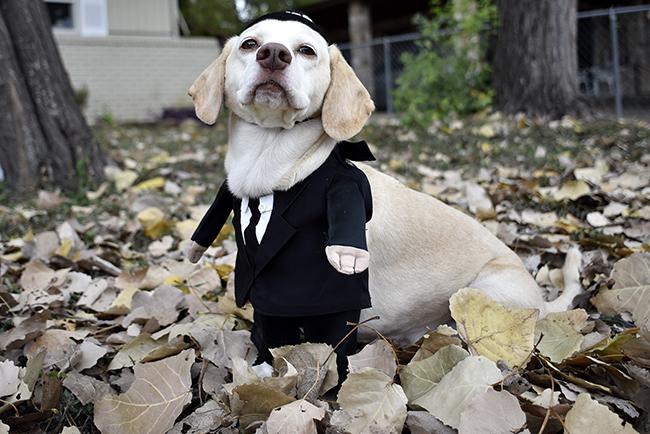2015-10-22_Mayor_Dog_Gabriel