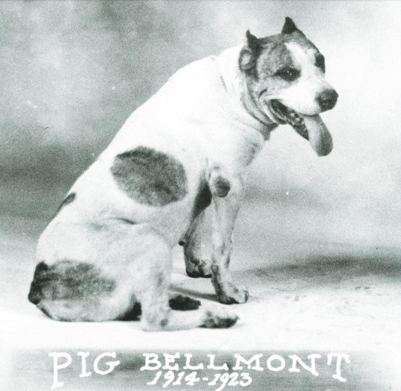 pig+bellmont_court_UT_Austin_tumblr