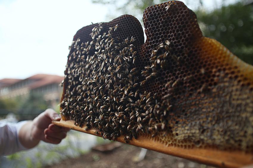 Bees_Rachel