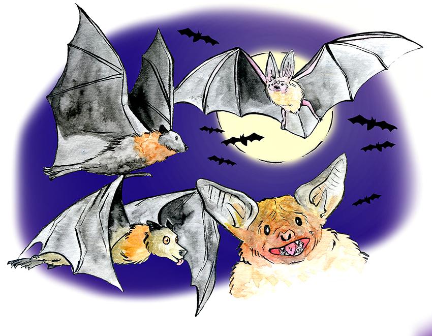 1117_MelWestfall_bats2