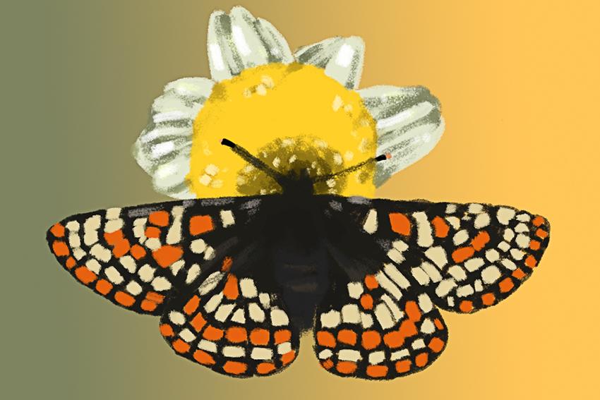 0505_JackyTOVAR_Butterfly