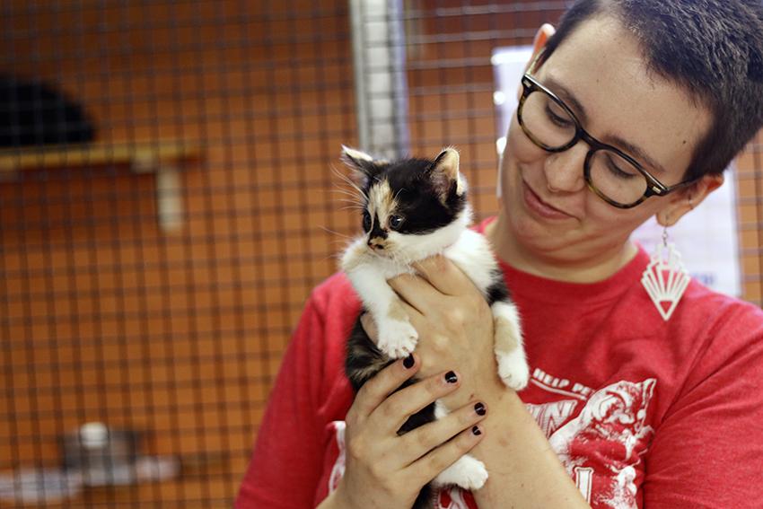 Hurricane_10-09-2017_Austin_Pets_Alive_kittens_Tristan