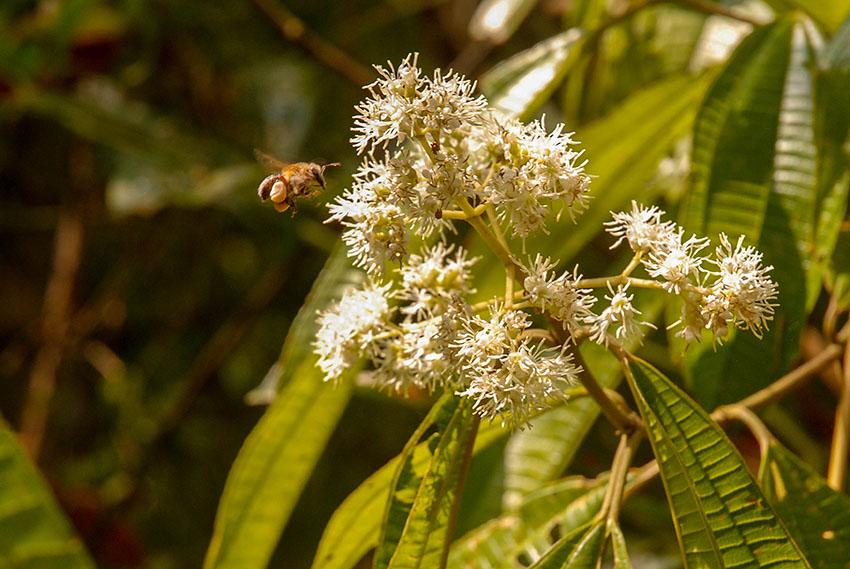 Bee_1116_Courtesy of Antonio R