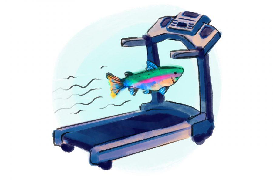 Fish_0305_AnnetteMeyer_fisholympics (7)