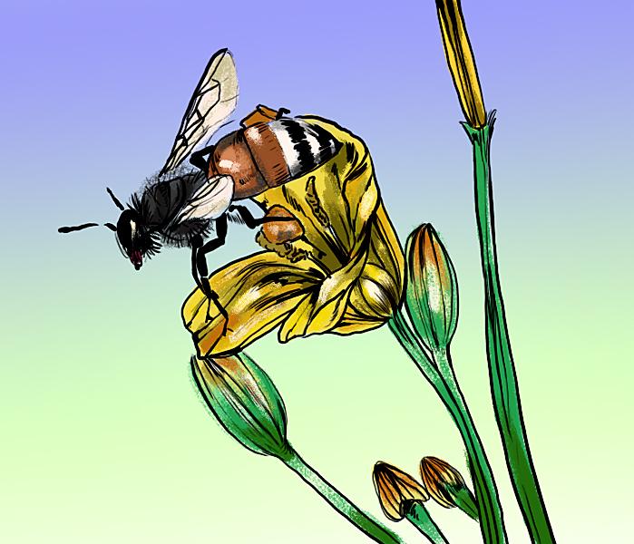 bee_0419_JackyTovar_beekeeping