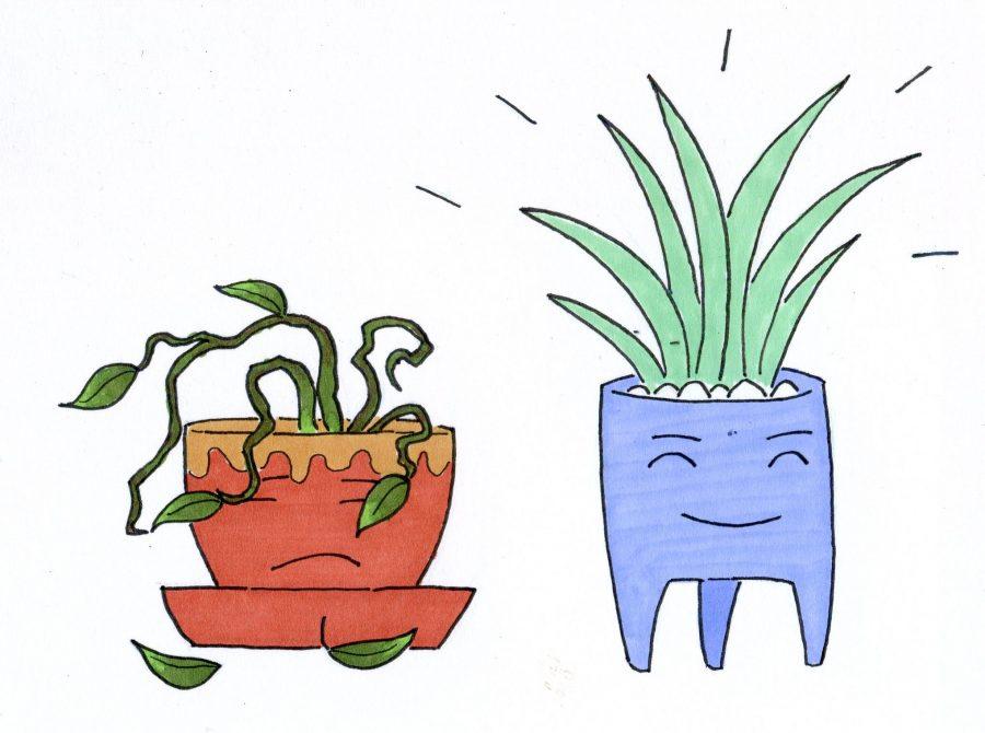 0919_LaurenIbanez_Plants137