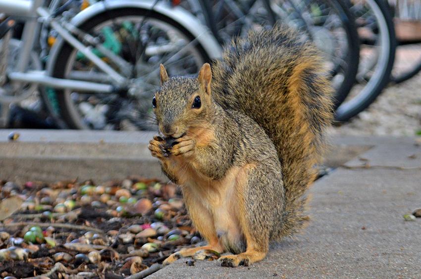 squirrel_2018-10-02_Squirrel_Avery