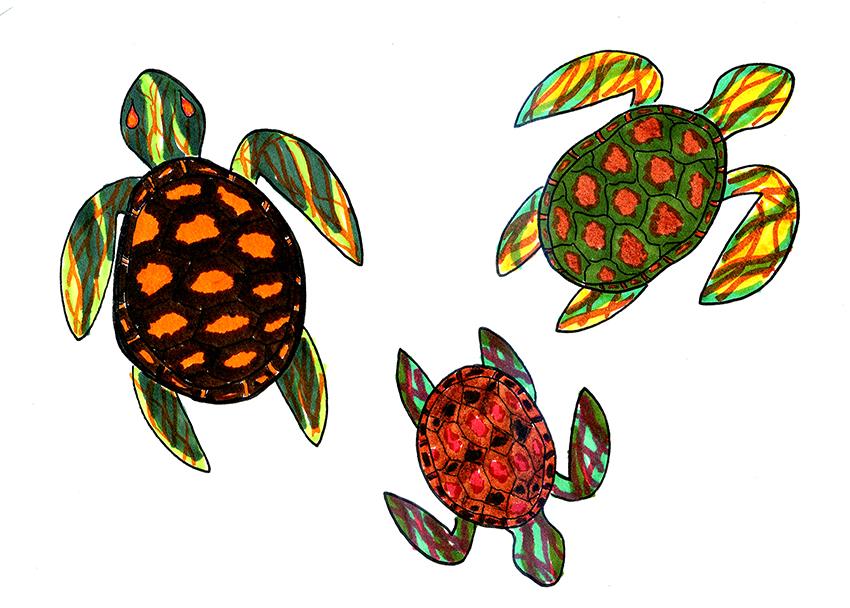 turtles_1025_ChanningMiller%28UTTurtles%29