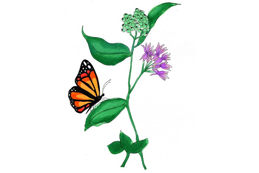 1206_AlekkaHernandez_butterfly