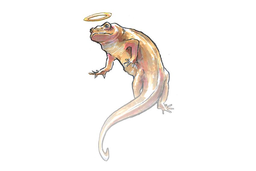 salamander_0201_DianeSun_Salamander copy
