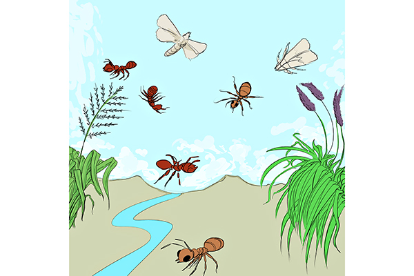 invasive_0313_AndrewChoi(InvasiveSpecies)