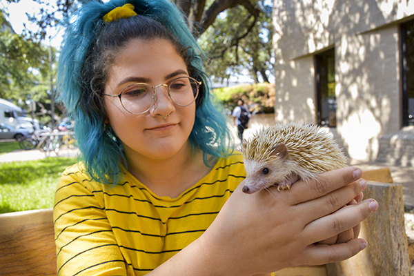 therapy_2019-10-07_Pet_Therapy_Hedgehog_Evan