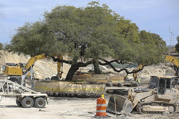 Historic Trees_2020-03-13_Historic_Trees_Kara