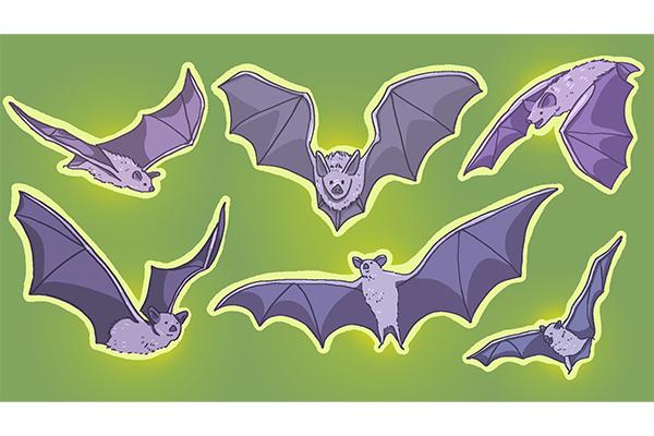 10-05_bats_Leah