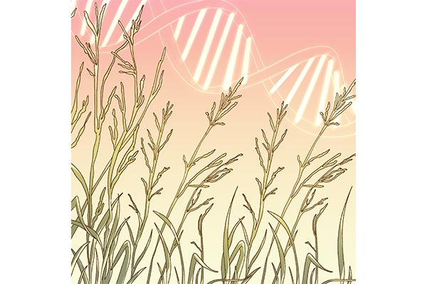 Switchgrass Genes_RockyHigine
