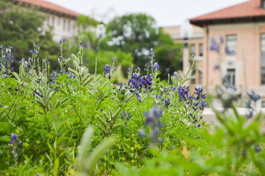 Spring has sprung: here are the best places to find bluebonnets near Austin this season