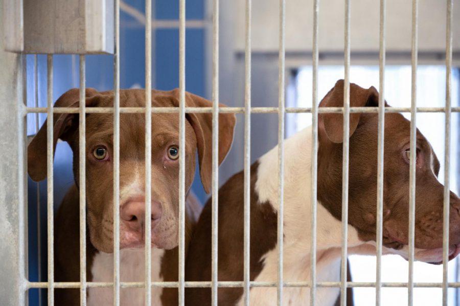 UT students help Austin animal shelter solve over-intake problem